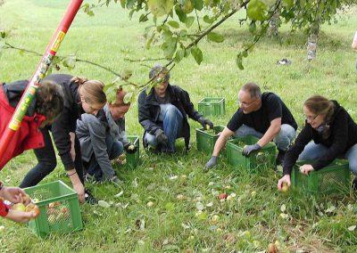 Apfelernte, Bioland